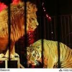سیرک اسارت حیوانات قهرمانی ها در کرج