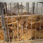 انتقال حیوانات وحش از پارک ملی به قفس ها و فضای چند متری باغ وحش ارم