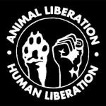 فعالیت های جبهه آزاد سازی حیوانات در ایالات متحده در 5 سال اول