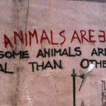 تمام حیوانات برابرند