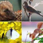جمعیت حیات وحش دنیا در ۴۰ سال ۵۸ درصد و جمعیت مهره داران هر ساله به طور متوسط ۲ درصد کاهش یافته