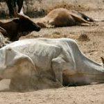 زنگ خطر قحطی در کنیا به صدا درآمد