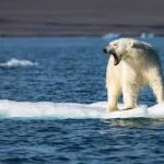 ۲۰۱۶ چگونه سالی برای محیط زیست در جهان بود؟
