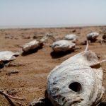 ۷۰ درصد تالابهای ایران یا خشک شده یا در معرض خطر و تهدیدات جدی قرار دارند