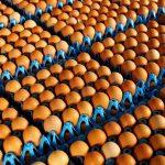 اسامی ۱۷ کشوری که در آنها میلیونها تخم مرغ آلوده هلندی توزیع شده است