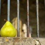زندانی سیاسی مسعود سیفی زاده بعد از تحمل ۲۳ ماه حبس آزاد شد